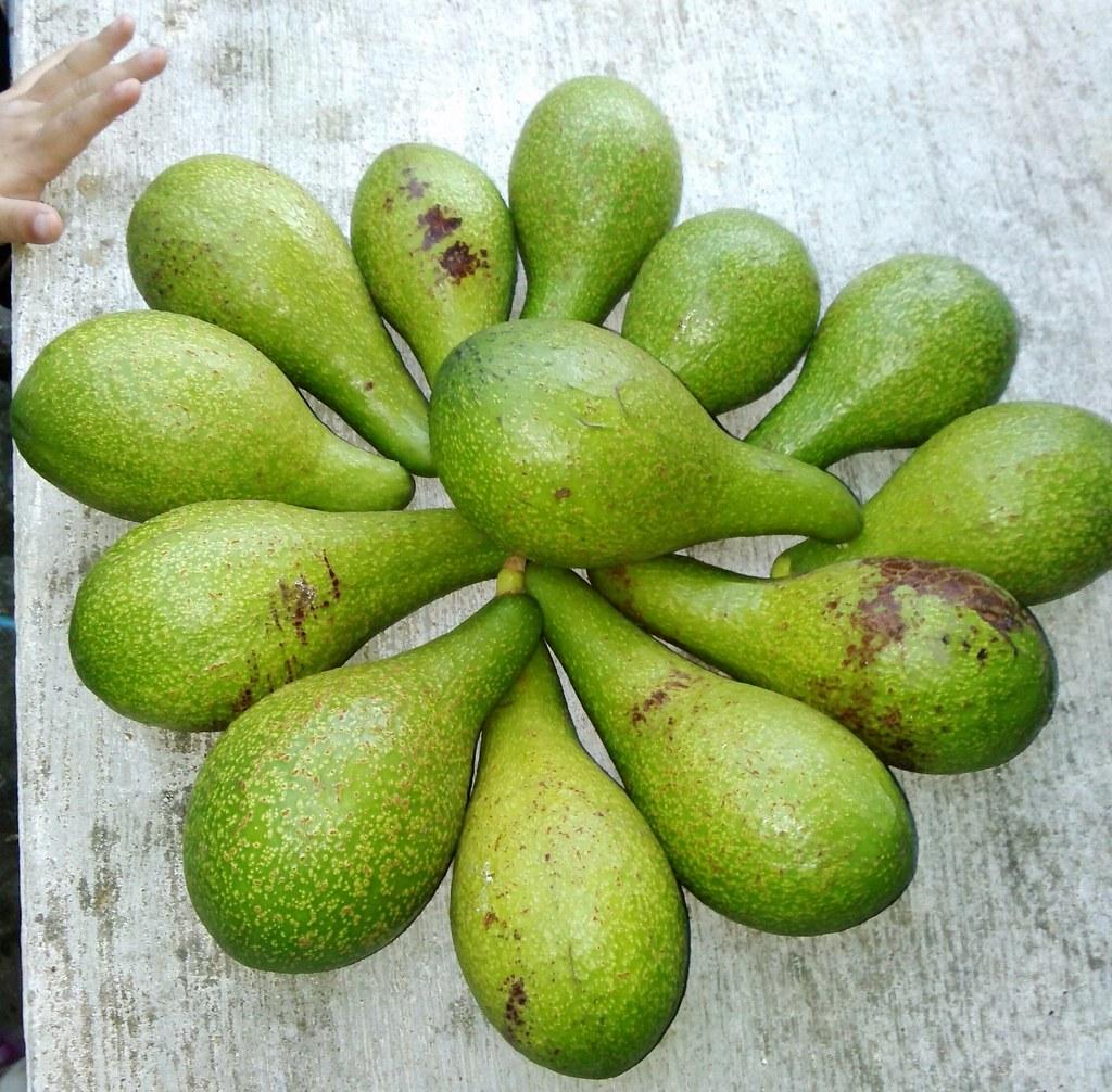 Aguacate fruta o verdura yahoo dating