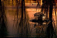 Splash! (tampurio) Tags: sunset sky panorama sun sunlight lake tree water sunrise landscape lago mirror tramonto sony tramonti splash sole acqua riflessi paesaggi paesaggio padova riflesso mirroring slta58