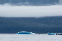 _MG_4839a (markbyzewski) Tags: alaska ugly iceberg tracyarm