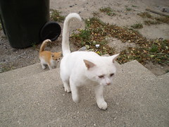 Jack and Mystic (universalcatfanatic) Tags: orange cats white green up grass stairs cat concrete grey garbage kitten stair gray cement steps follow pale neighborhood upstairs step stray neighbourhood mystic following