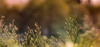 Swedish Spring Greenery