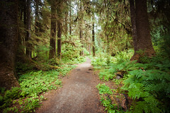 I only went out for a walk and finally concluded to stay out till sundown, for going out, I found, was really going in. (ygchan) Tags: forest washington moss woods hiking pines ferns olympicnationalpark hohrainforest