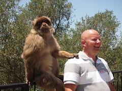 Keep calm and smile. (Lady Black) Tags: sea man smile rock monkey photo spain mediterranean hand bald sit ape banister shoulder gibraltar iberianpeninsula britishoverseasterritory