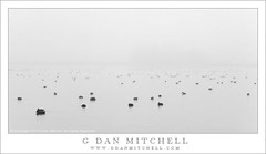 Ducks, Pond, Fog (G Dan Mitchell) Tags: california county blackandwhite usa nature water monochrome fog swim print landscape pond wildlife horizon stock ducks merced license refuge mnwr