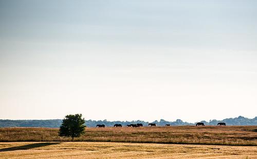 Everöd, Skåne, July 6, 2014
