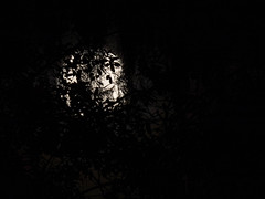 Full Moon 02_03_2015 051 (VinceFL) Tags: moon luna fullmoon orlandoflorida manfrottotripod nikonmll3 nikond7100 vincefl tamronsp70200mmf28divcusd 13xmode fullmoon02032015