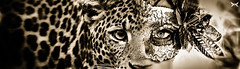 Gesichtswandel (CanonStarShoot) Tags: blue light woman color sexy home beautiful beauty up animal angel photoshop canon wonderful dark studio eos licht nice eyes close sweet bokeh young hobby lila german e shooting engel augen frau yon blitz morph effect venecia venedig softbox beginner deutsch versuch fee maske heis composing compose schn bearbeitet romantisch effekte qualitt entfesselt nenecia canong1xii