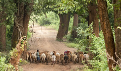 Kangar Ghati National Park (wietsej) Tags: park india zeiss sony national 135 18 herd a700 kangar chhattisgarh ghati bastar sal135f18z koleng