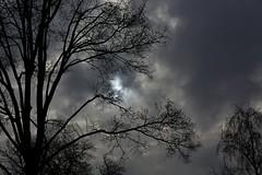 sonnen wolken baum (fdfotografie) Tags: silhouette flora outdoor pflanze himmel wolke grau struktur tageslicht dslr ste sonne baum muster schwarz zweige ausschnitt textur schattenriss bewlkt farbfoto querformat lichtstimmung verzweigung d7100
