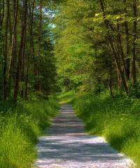 05-14-2016-Nature Path (Valerie Sauve-Vancouver) Tags: trees nature outdoors path trail northvancouverbc maplewoodflatsconservation