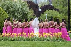 Row of Pink Bridemaids (Read2me) Tags: behind row many pink spring publicgarden bride wedding frombehind ge she thechallengefactorywinner pregamewinner challengeclubwinner 15challengeswinner friendlychallenges challengeyouwinner cyunanimous gamesweepwinner