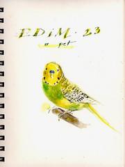 EDM, Day 23, a pet (Sherry Schmidt) Tags: pet green bird art birds yellow watercolor painting budgie parakeet watercolour edm everydayinmay