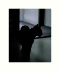 Home's cat night (hlne chantemerle) Tags: pet home night cat chat animaux maison vue intrieur photographies denuit