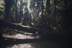 Photo (One Potato Steph) Tags: life trip travel newzealand vacation sunlight get up forest for waterfall blog goodness amazing woods nikon flickr all post you walk like bio things we went have thank glorious nz link there d750 after through traveling moment capture chasing enlighten hasst travelphotographer yourshot natgeotravel twentytwopotatoes guardiantravelsnap