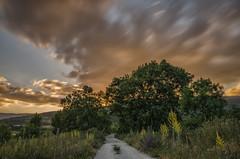 AMP_7070_1 (Amparo Hervella) Tags: cloud landscape atardecer sunset lozoya comunidaddemadrid espaa spain camino path rbol tree largaexposicin longexposure d7000 nikon nikond7000 wewanttobefree