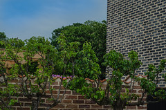 Trees and bricks (frankmh) Tags: tree brick architecture skne sweden outdoor hgans