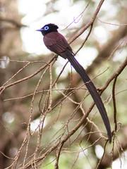 (Polotaro) Tags: bird nature pen olympus  zuiko  6      fzuiko300mmf45 epm2