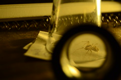 Spider in shot glass 1 (unedited ) (b_d_w_s) Tags: spider nikon arachnid shotglass cfl unedited nikond3100