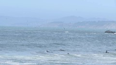 Surfing with lunge feeding Humpback whales off Pacifica on June 11, 2016 (rocksandstones) Tags: ocean mar pacific surfing linda kayaking surfers whales humpback pacifica rare