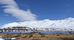 Spring has sprung in the North fjords (lunaryuna) Tags: panorama snow mountains season landscape iceland spring ngc shore vegetation fjord lunaryuna dwellings snowcappedmountains northiceland seasonalchange northfjords