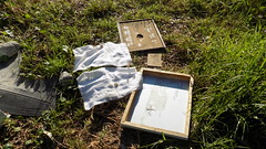 Beehive double layered lid system and insulator hessians(covers the top of the inside under bottom lid) for winter - June 2016 (nicephotog) Tags: winter scarf european nest top bee cover temperature honeybee beehive lid apis apiary hessian insulator carnica carniola