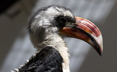 National Zoo  (1348) (smata2) Tags: birds zoo nationscapital smithsoniannationalzoo itsazoooutthere zoosofnorthamerica