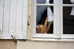 Chat  la fenetre - DSC_7392 (eric.riflet) Tags: cat chat loirevalley fenetre griffe touraine indreetloire volet valledelaloire
