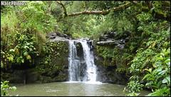 WF 1(1) (NatePhotos) Tags: road sunset sea hawaii bay waterfall rainbow cows turtle maui hana jungle waterfalls kapalua rooster eel napili 2016 natephotos