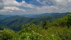 Shining Rock Wilderness, Pisgah National Forest, North Carolina (netbros) Tags: northcarolina mountainash pisgahnationalforest coldmountain thenarrows shiningrockwilderness samknob netbros internetbrothers