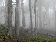 En la Niebla (Mono Andes) Tags: chile trekking backpacking bosque andes araucaria niebla lengas parquenacional chilecentral regindelaaraucana parquenacionalvillarrica