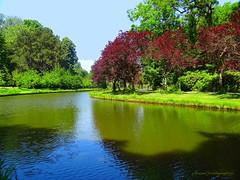 Pond in Vrijbroekpark, Mechelen (jackfre2) Tags: park trees summer water pond colours belgium mechelen vrijbroekpark