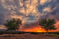 Watercolor Sky (inlightful) Tags: morning trees sunset sky sun newmexico nature leaves sunshine clouds sunrise evening colorful glow cloudy dirt souhwest