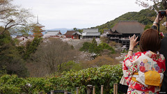 couple in kimono taking pictures of Kiyomizu-dera Temple (EMkro) Tags: original japan cherry temple spring asia raw foto blossom picture backpacking kimono kiyomizudera hanami tempel frhling kirschblte unbearbeitet