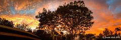 Sunrise (NettyA) Tags: panorama tree clouds sunrise pano au australia qld queensland indooroopilly 2016 appleiphone6