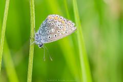 Butterfly (Alberto Nalda) Tags: butterfly mariposa