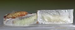 _MG_4294copy (clarissa griffioen) Tags: moth animal sesame larve plodiainterpunctella bio biology nature kitchen weat meel meelmotlarve macro youneverguesswhatifoundinthekitchen offspring family priest pop butterfly metamorphose trio 3 100mm canon 7d kinderkamer deliveryroom kindergarten couveuse natur meelmot weatmoth insect