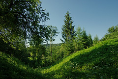 Wokowyja (Hejma (+/- 4500 faves and 1,5milion views)) Tags: park blue tree green grass for google market national jar translate chiaroscuro finder bieszczady businesstranslator toolkitwebsite translatorglobal