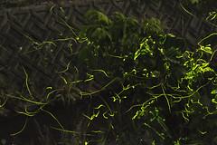 20160618-DS7_6705-6717-2.jpg (d3_plus) Tags: street sky plant mountains nature field japan bug nikon scenery nightshot dusk illumination daily  streetphoto nightview 28105mmf3545d toyama nikkor ricefield     dailyphoto  riceplant  28105 lightdisplay     28105mm   zoomlense        28105mmf3545 toyamapref d700 281053545 nikond700  aiafzoomnikkor28105mmf3545d  28105mmf3545af photoshopcc sankyovillage aiafnikkor28105mmf3545d