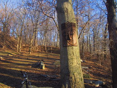 Buddha of the woods 3, Druid Hill Park (Zombie37) Tags: wood city blue trees urban brown tree art nature face forest garden outside outdoors woods place natural buddha bare branches maryland baltimore carving hidden serenity surprise trunk serene panels sights closedeyes druidhill druidhillpark woodonwood