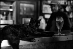 """Chat de comptoir"" (praetorian29620) Tags: fdrouet bw nb film chat cat f801s"