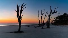 (Cincy Dave) Tags: ocean sunrise sand driftwood jekyllisland goldenisles driftwoodbeach