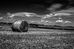 Essere felici (mercadantephoto) Tags: white black clouds canon landscape photography countryside salento lecce grano
