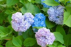 27Yamada Pond Park (anglo10) Tags: flower japan
