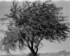The Nature of Wind (Shot by Newman) Tags: park bw southwest nature 35mm daylight wind coloradoriver ilford ilforddelta400 shotbynewman