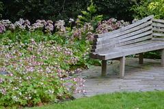 Bench in a corner (hcorper) Tags: bench monday botanicalgardens edinburgh scotland