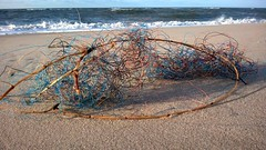beach (maramillo) Tags: sea strand found crap sylt cy unanimous maramillo