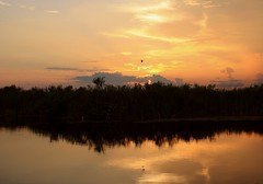 Golden Slumbers (PelicanPete) Tags: light sunset sky usa cloud black nature water beautiful beauty clouds skyscape landscape gold inflight wings kayak ray shadows unitedstates natural florida outdoor dusk wildlife horizon scenic trails calm canoe pillows ibis trail national serene rent canopy cloudscape rolling puffyclouds floridaeverglades refuge southflorida flyby sawgrass naturephotography loxahatchee landscapephotography goldenslumbers littledrama riverofgrass sunsetphotography diamondclassphotographer flickrdiamond canyoucanoe naturesspirit launcharea blendedblues palmbeachcountyfl dmslair artisticsunsetphotography springuplight