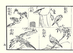 Top left, center right – jungle nightjar, varied tit, munia; Bottom left, right – golden pheasant, brown-eared bulbul (Japanese Flower and Bird Art) Tags: bird art japan japanese book golden tit pheasant picture jungle munia woodblock kobayashi varied bulbul indicus ukiyo phasianidae nightjar pictus chrysolophus varius caprimulgus estrildidae paridae lonchura browneared ixos pycnonotidae caprimulgidae amaurotis sittiparus readercollection yonezo