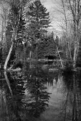 Flooded Woodland (gmolzahn) Tags: sonya77 silverefexpro2