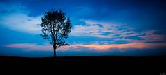 Skyline. (jrmllvr) Tags: pink blue light sunset red sky cloud sun black tree against field rose set skyline backlight sunrise canon de landscape rouge soleil back noir belgium belgique horizon champs sigma jour bleu ciel le 17 rise nuage paysage 1770 70 liege arbre contre ligne couch villers wallonie lev 50d bouillet